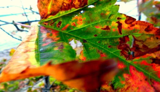 Leaves are beginning to change colours in Northern Ontario.